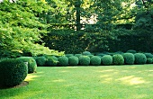 A lawn and a round box trees in an artistically landscape garden
