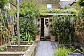 The view looking down the path a compact garden towards a wooden shed surrounded by vines and shrubs.