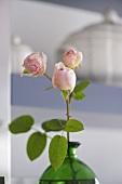 Pink rosebuds in green glass