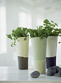Herbs in modern ceramic vases on white painted work top