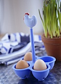 Eggs in a plastic blue egg holder with chicken on top