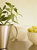 Close up of plant in chrome jug vase and bowl of grapes.