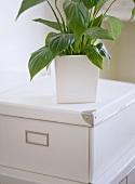 Close up of plant pot on white storage box.