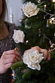 A woman decorating a pine tree with white roses