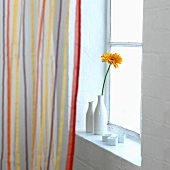 An orange gerbera in a white vase and candles on a windows sill behind a striped curtain