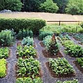 Grosser Gemüsegarten mit Holzpyramide als Pflanzenranke