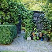 Hecken in Formschnitt am Holztor eines Gartens