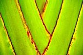 Ausschnitt einer Pflanze