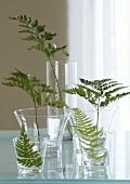 Individual fern leaves in glasses