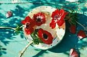 Teller mit roten Anemonenblüten auf in abblätterndem Türkis gestrichenem Tisch