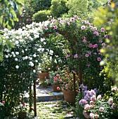 Rosenbogen in einem Garten