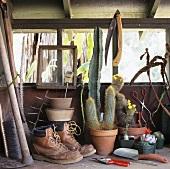 Alte Lederstiefel, Kakteen und Gartengeräte auf dem Regal im Gartenhäuschen