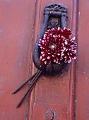 Alter Türklopfer mit roten Dahlien an einer roten Tür