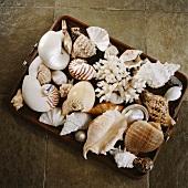 Holztablett mit exotischer Muschel-Sammlung auf hellbraunen Bodenfliesen