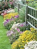 Rosa Petunien und gelbe Tagetes vor Holzzaun im sommerlichen Garten