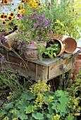 Tontöpfe mit blühenden Blumen auf rustikalem Holztisch