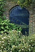 Helianthemum vor Gartenmauer aus Ziegel mit Tor