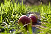 Apples lying ion the grass on the bank