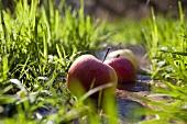 Äpfel liegen am Uferrand im Gras