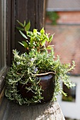 Rosemary and bay leaves on a window sill