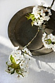 A sprig of cherry blossoms on an old metal plate