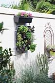 A vertical herb garden on a wall