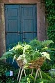 Farn in einem Weidenkorb vor einem alten Holztür im Garten