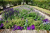 Flower bed with purple blooming flowers