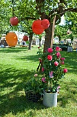 Colourful lanterns hanging in a tree and a rose bush in front of it