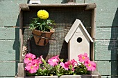 Flowers and the birdhouse in a plant box