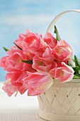 Pink tulips in a basket (variety: Dreamland)