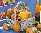 Ornamental gourds in wicker basket
