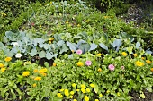 Small cottage garden with flowers, herbs and vegetables