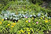 Kleiner Bauerngarten mit Blumen, Kräutern und Gemüse