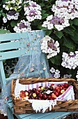 Basket of cherries on chair under flowering shrub