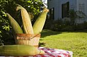 Corn cobs in wooden bucket in garden