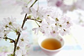 Branch of cherry blossom and bowl of tea