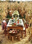 Gedeckter Tisch am Maisfeld