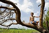 A boy sitting in a tree