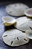 Sand dollars and seashells