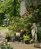 Rosebushes with the wall of a house and Greek statue