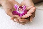 Hände halten eine Orchidee