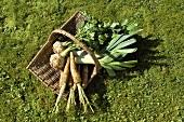 Frisch geerntetes Gemüse im Korb