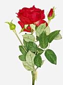 An artificial rose