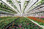 A greenhouse at a garden centre
