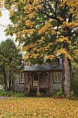 House and tree in autumn