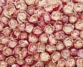 Roses (full-frame)