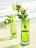 Tall green vases, one with a stem of phlox
