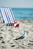 Seagull and deckchair by the sea