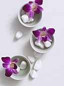 Orchid flowers and pebbles in small porcelain bowls